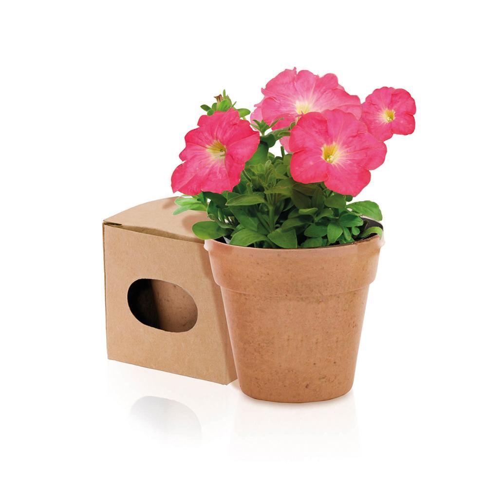 Lot 25 planter Bio + seeds 100% Eco in little box Kraft-Details weddings, christenings, Holy Communion, original Guests birthday