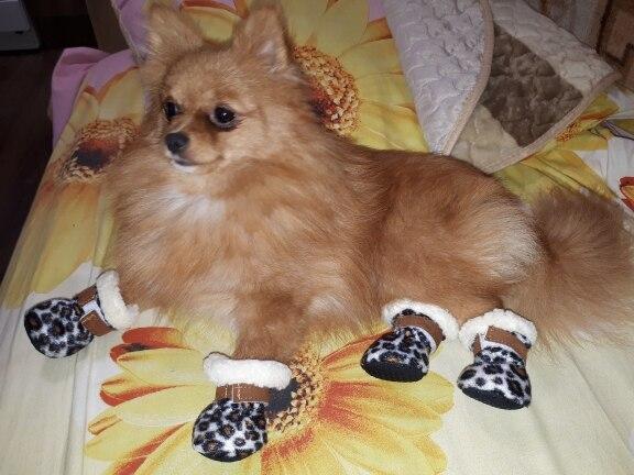 köpek ayakkabıları