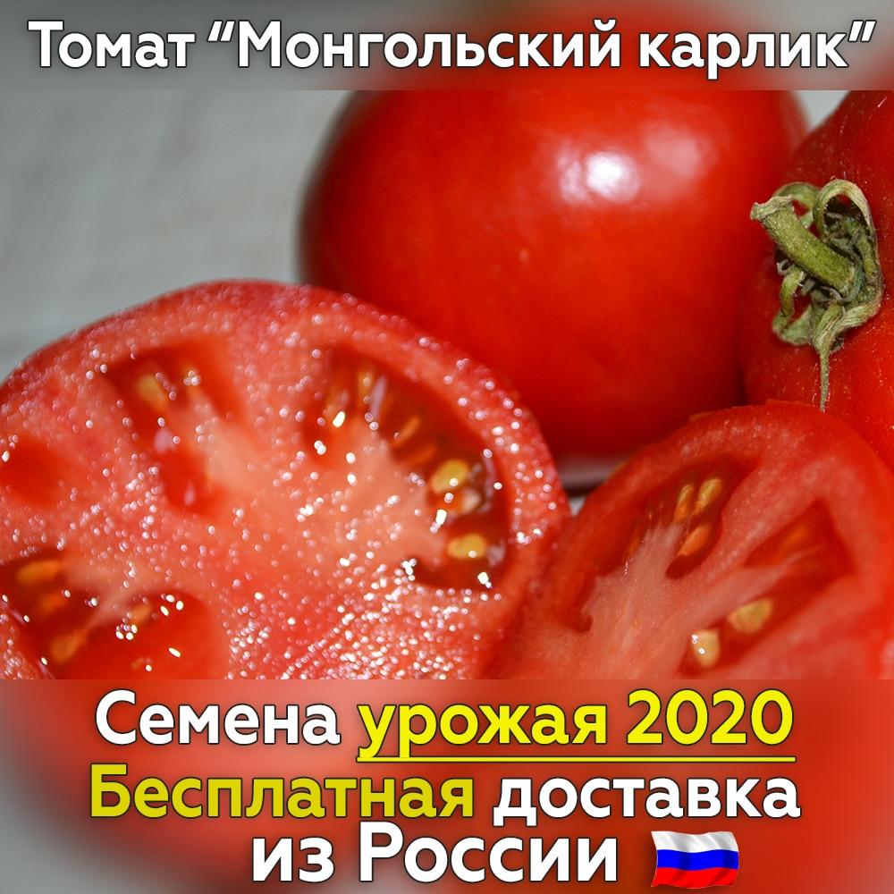 Mongolian dwarf tomato seeds-free ...