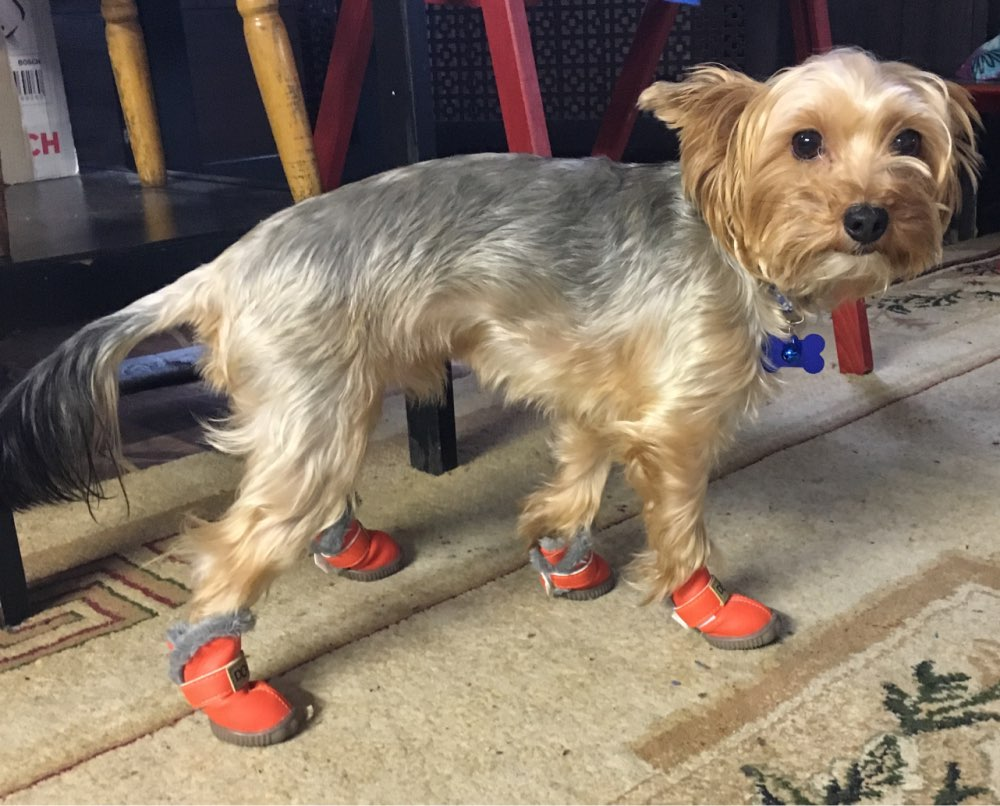 DogMEGA Winter Dog Boots   Small Dog Winter Boots   Best Dog Boots for Snow photo review