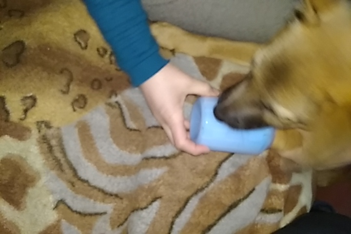 Dog Paw Cleaner | Dog Paw Washer | Dog Foot Washer photo review