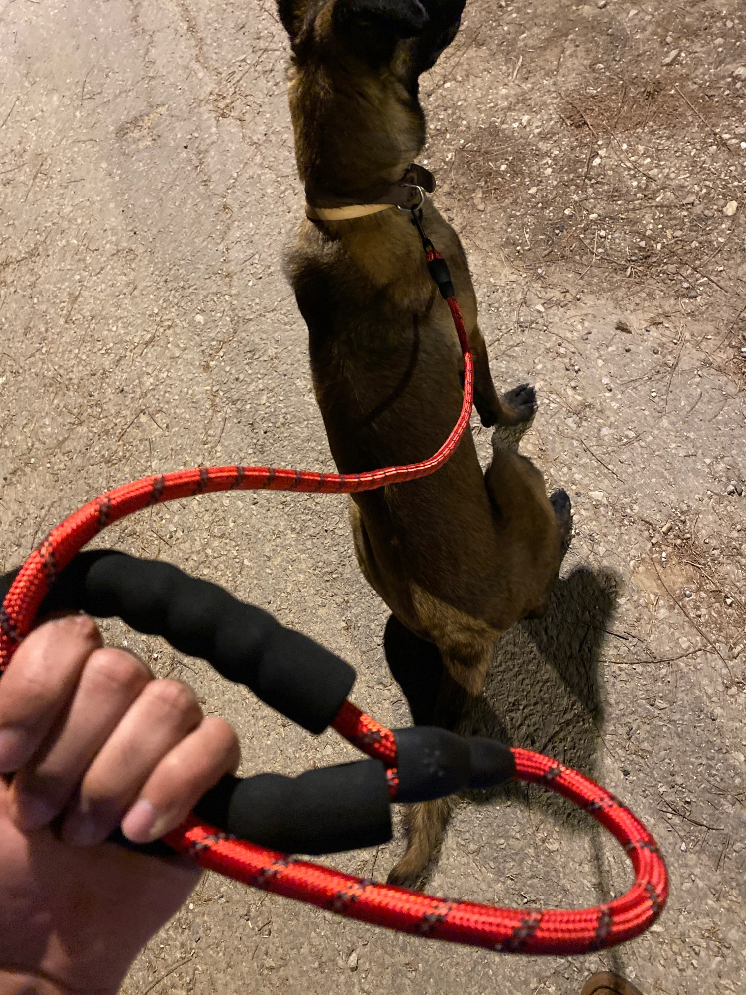 Climbing Rope Dog Leash | Carabiner Dog Lead photo review