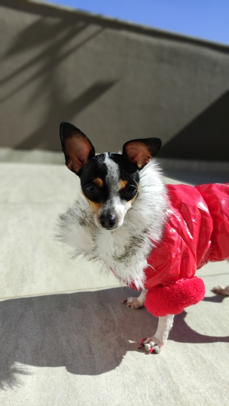 Dog Coat with Zipper Pocket Design photo review