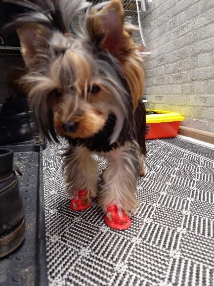 MEGA Dog Summer Shoes | Breathable | Anti-slip | Reflective photo review