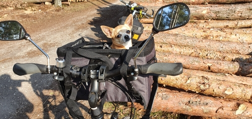 Dog Basket for Bike Weight Limit 22 lbs | Bicycle Dog Carrier | Front Bike Basket for Dog photo review