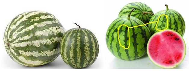 生活常识进行挑选出好西瓜的方法详细介绍-养生法典