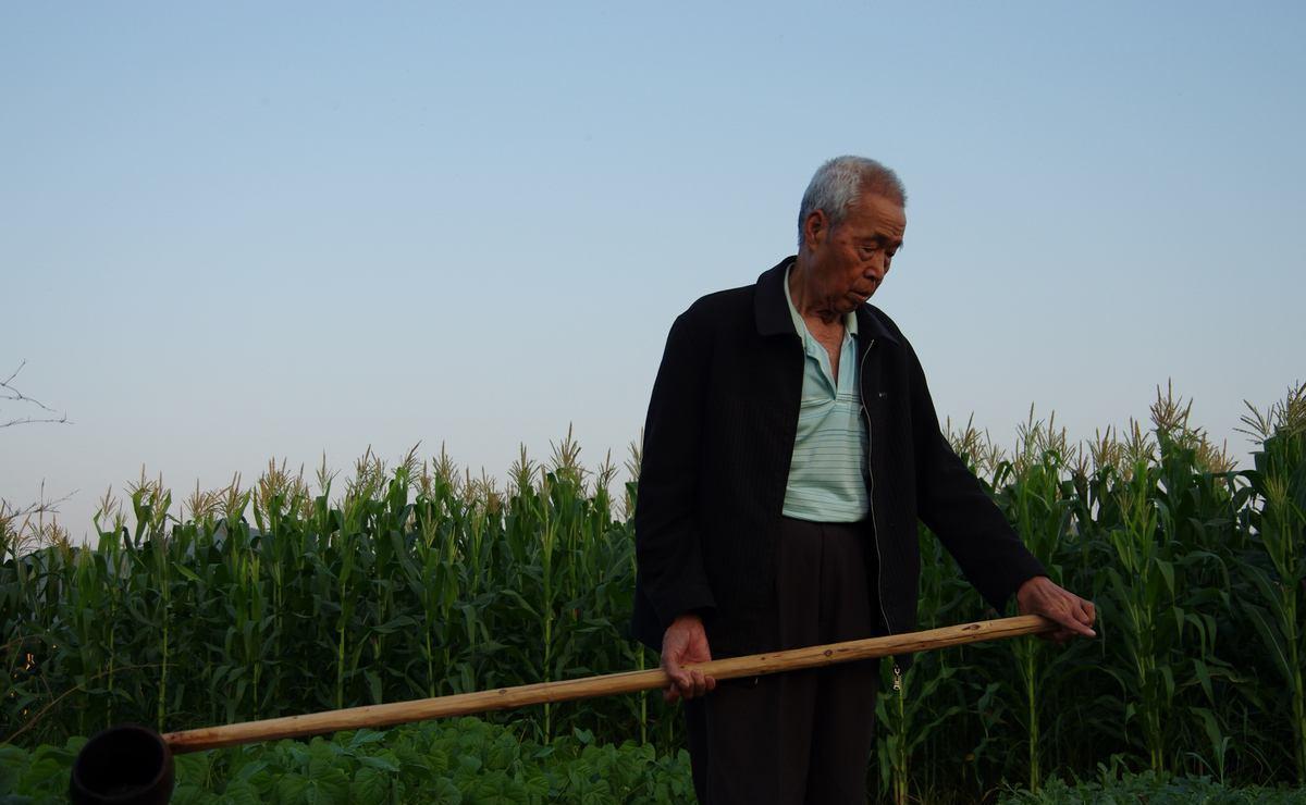 农村土地出让新的改变,生活保障更好?农民:好消息插图(7)