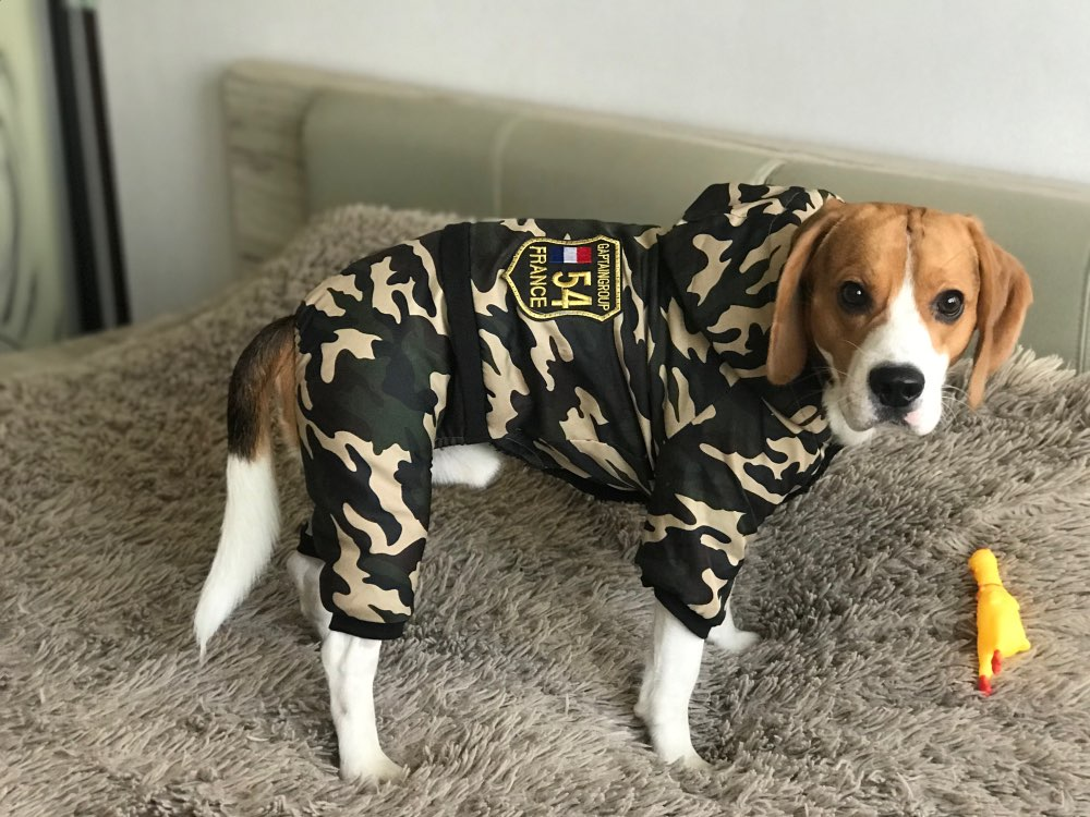 Dog Snowsuit | Dog Jacket | Coats for Dogs Waterproof | Dog Coat for Winter photo review