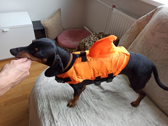 MEGA Dog Shark Life Jacket | Shark Life Vest for Dogs | Dog Life Jacket photo review