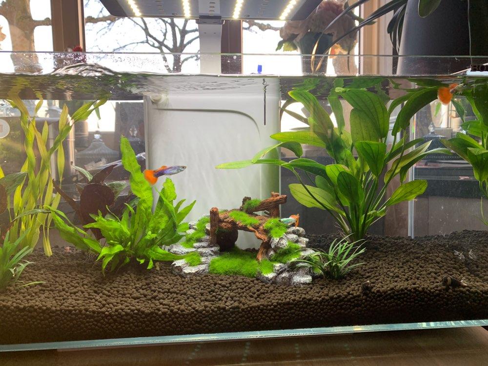 Meilleure vie pour poisson résine grotte décor pour Aquarium