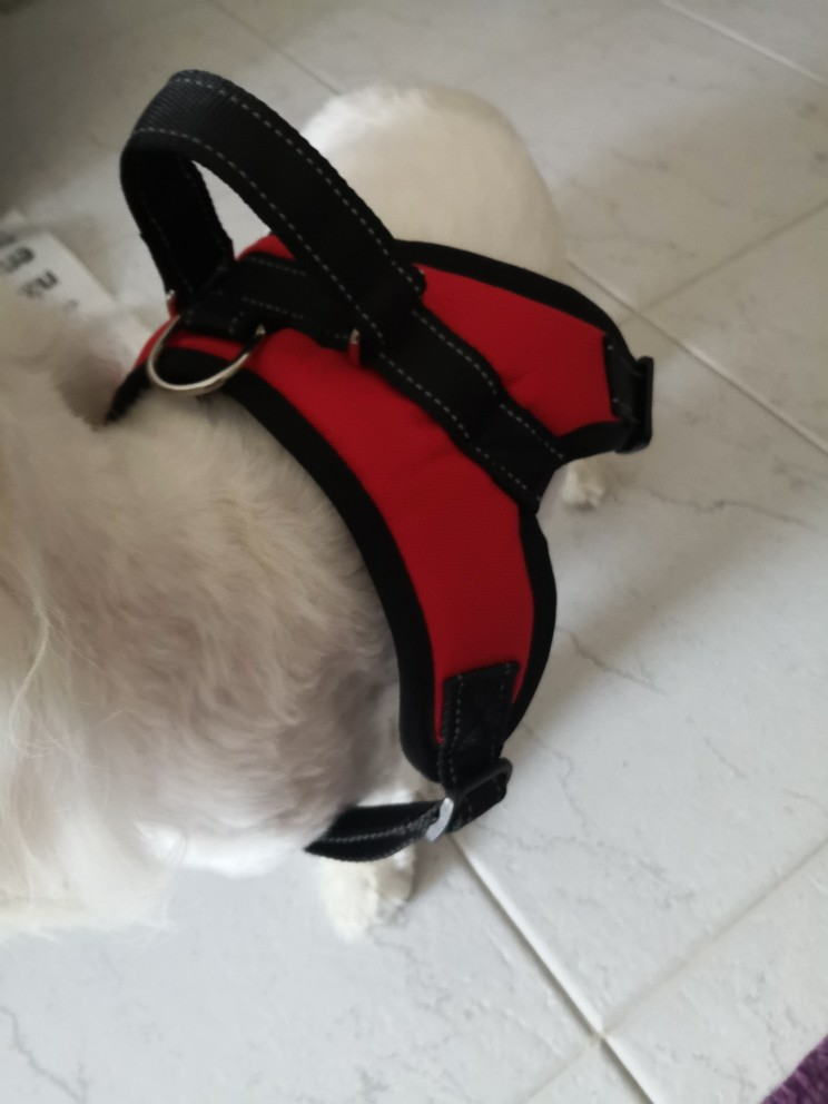 Dog Harness | Leather Dog Harness | Pug Life Harness | No Pull Dog Harness photo review