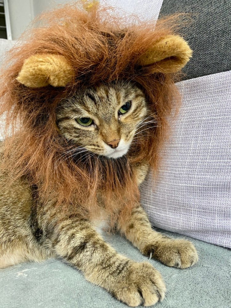 Dog Lion Mane for Puppy, Small Dog, Cat | Dog Lion Costume | Cat Lion Mane | Funny Dog Costumes photo review