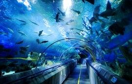 海洋世界.