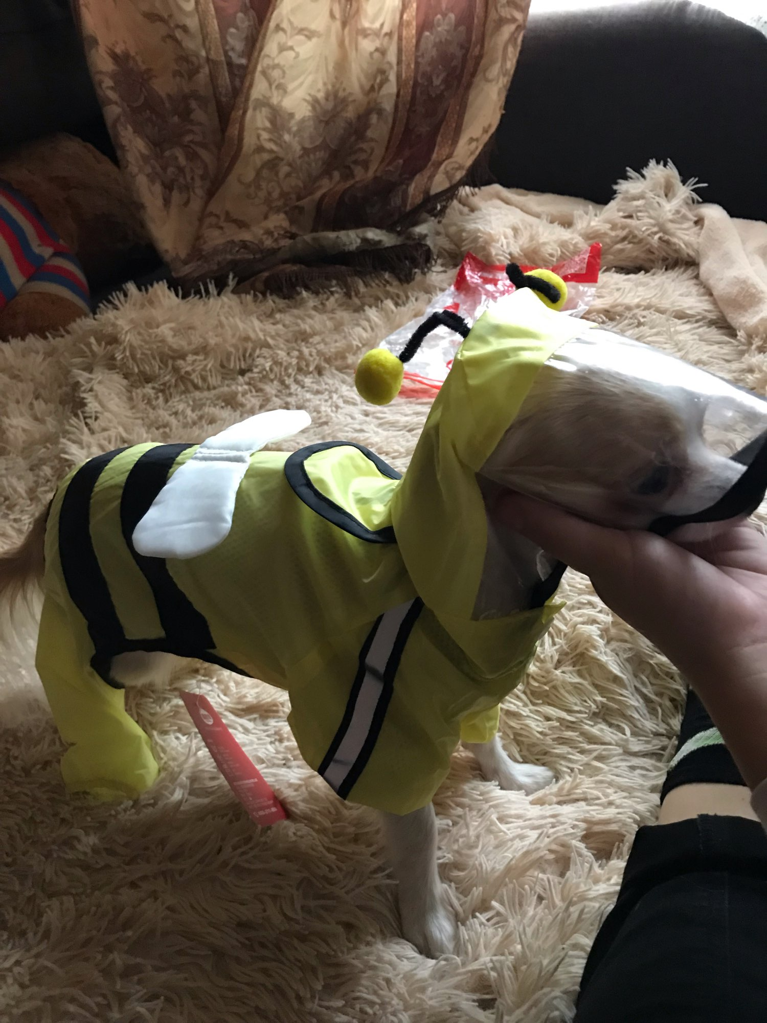 Dog Four-legged Bee Shaped Raincoat | Variety Size Raincoat for Dog with Harness photo review