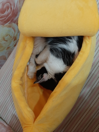 The Banana Dog Bed | Cute Dog Beds | Cute Puppy Beds photo review