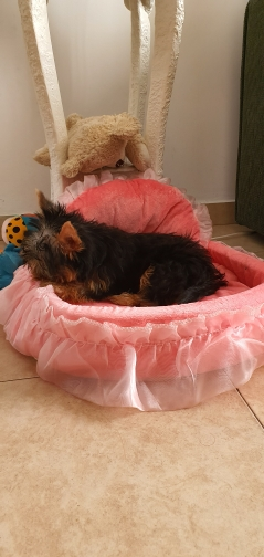 Cute Small Dog Beds | Cute Puppy Beds | Cute Girl Dog Beds photo review