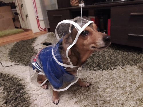 Best Dog Raincoat with Hood | Puppy Raincoat with Hood | Waterproof Dog Raincoat photo review
