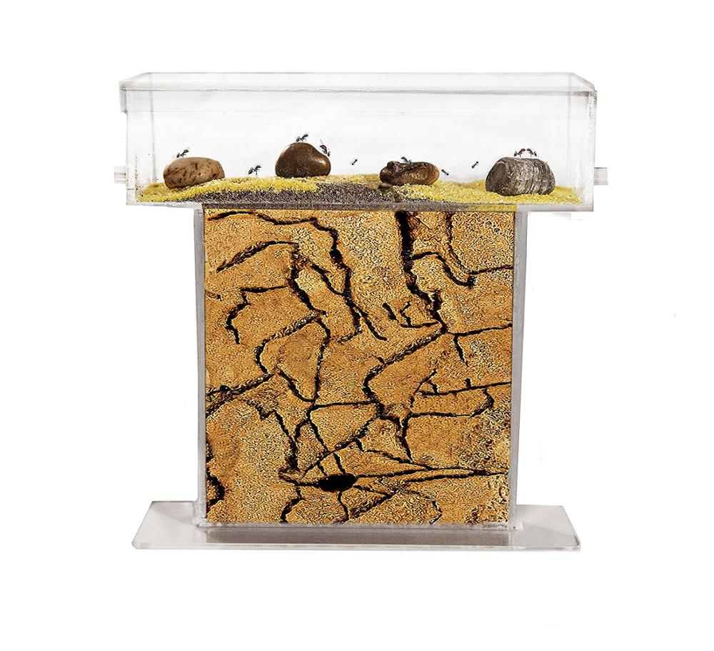 Anthill Natural Sand-Kit T Acrylic Media 15x15x1,5 Cm (Ants Shipping)