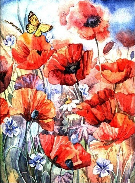 Painting By Numbers Poppies And Butterfly, 40x50 Cm