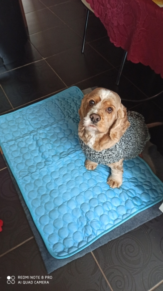 MEGA™ Cool Mat for Dogs | Cooling Dog Bed | Cooling Blanket for Dogs photo review
