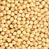 High Quality Roasted & Salted English Hazelnut Dry Fruit dry food wonderful Hazelnut nuts new crop