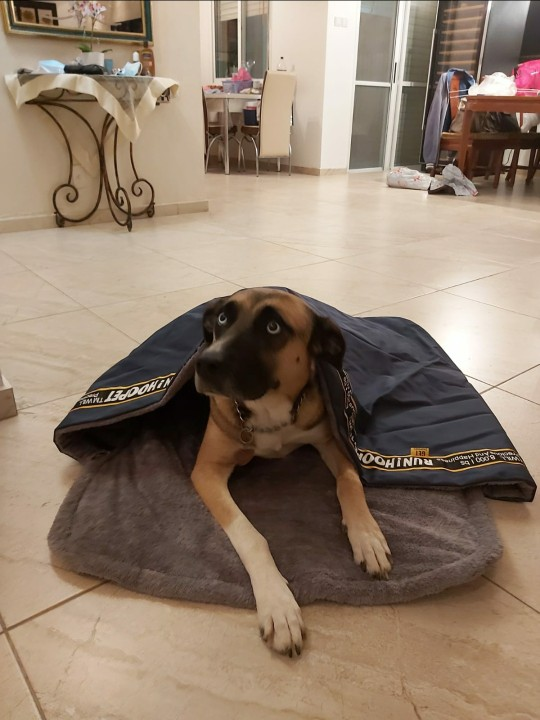 DogMEGA Dog Cave Bed | Snoozer Cozy Cave photo review