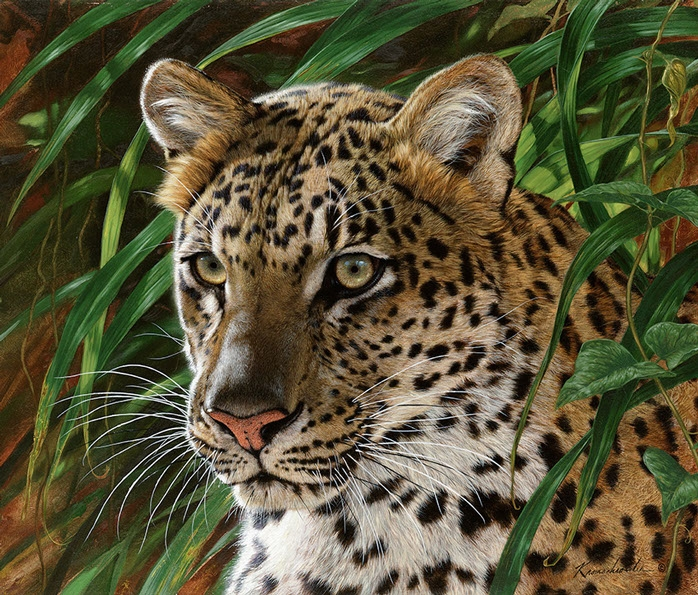 Painting By Numbers Leopard, 40x50 Cm