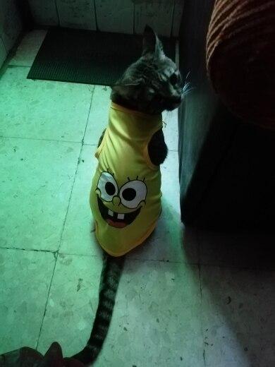 Koszulka dla psa SPONGEBOB photo review