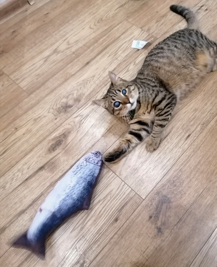 Worlds First Fish Kicker Toy photo review