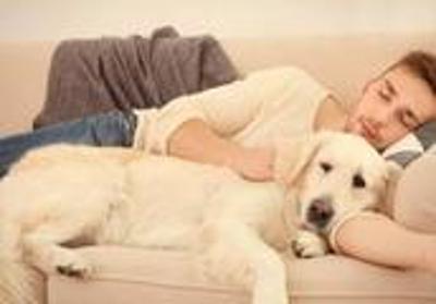 """拉布拉多犬这几个""""烦人""""的行为,是爱你的表现,不要再怪它了"""