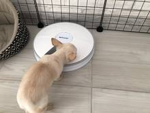 A good feeder, it works like a clock, it opens feeds a psinka) the only thing so hard for