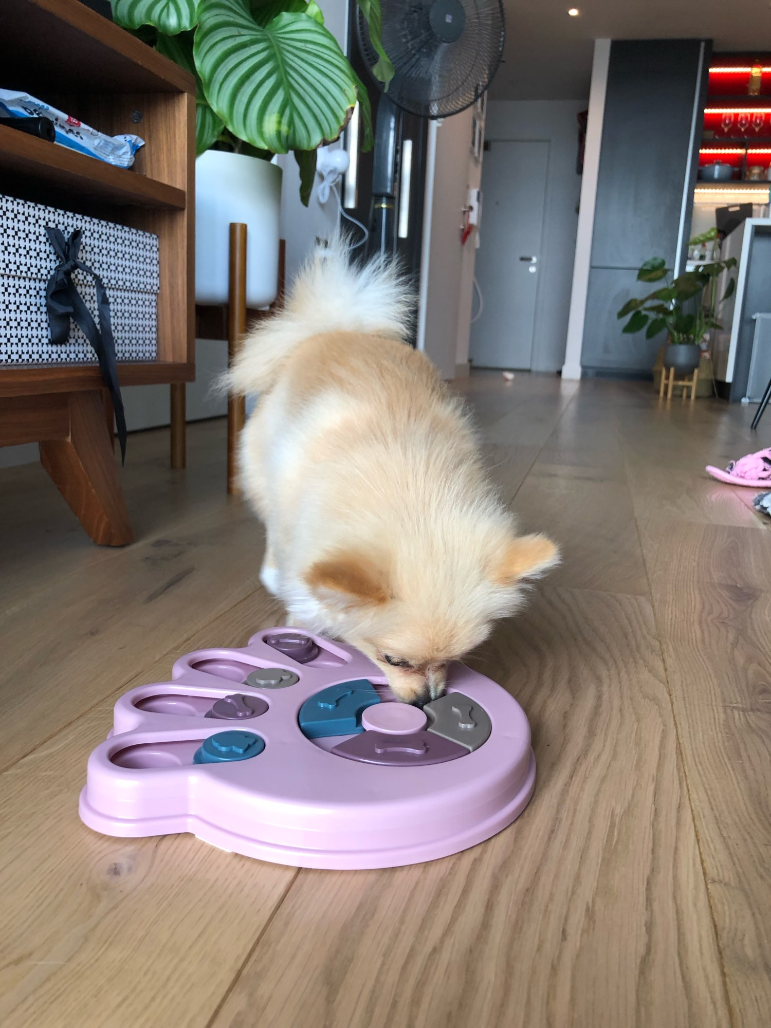Interactive Dog Puzzle Toys Increase IQ photo review