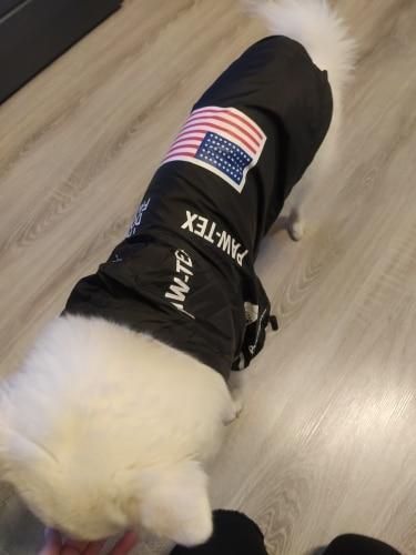 Stylish Dog Windbreaker - Black - Multi-buy photo review