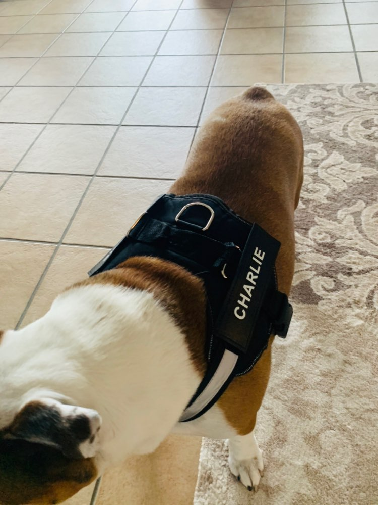 MEGA™ Custom Dog Harness | Name Dog Harness | NO PULL Dog Harness photo review