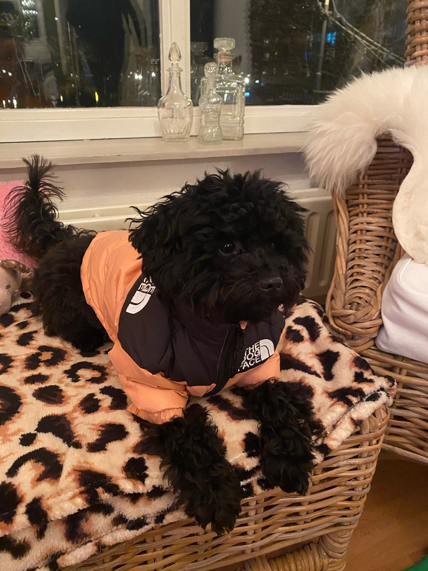 Designer Puffer Dog Jacket - x4 colours photo review