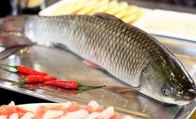 草鱼应该怎么做给宝宝吃营养更好-养生法典