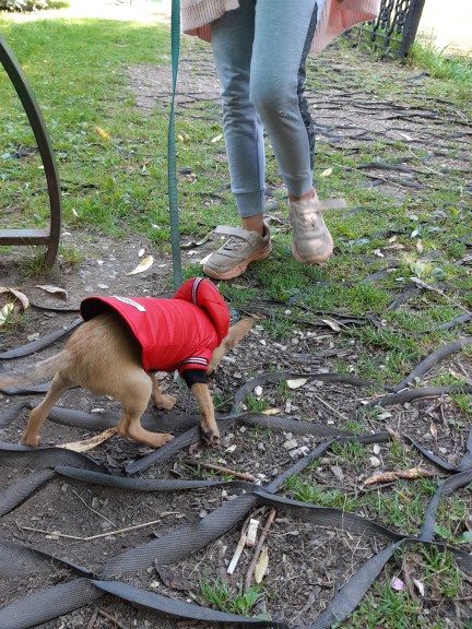 DogMEGA Dog Snowsuit for Small Dog | Waterproof Dog Snowsuit photo review