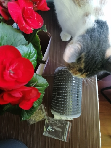 Cat Self Groomer with Cat Nip photo review