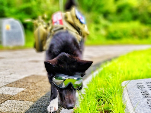 Adjustable Goggles for Dog | Waterproof, Windproof and Anti-UV Goggles for Dog photo review