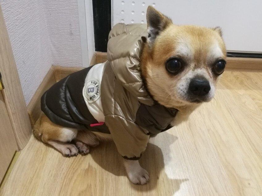 Chaqueta impermeable con capucha para Chihuahua y perros pequeños photo review