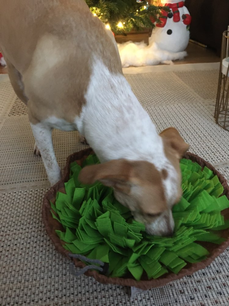 Washable Snuffle Mat | Snuffle Mat for Dogs | Snuffle Rug for Dogs photo review