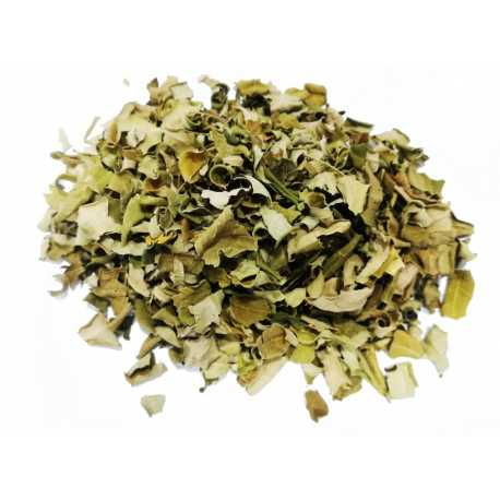 moringa-feuilles