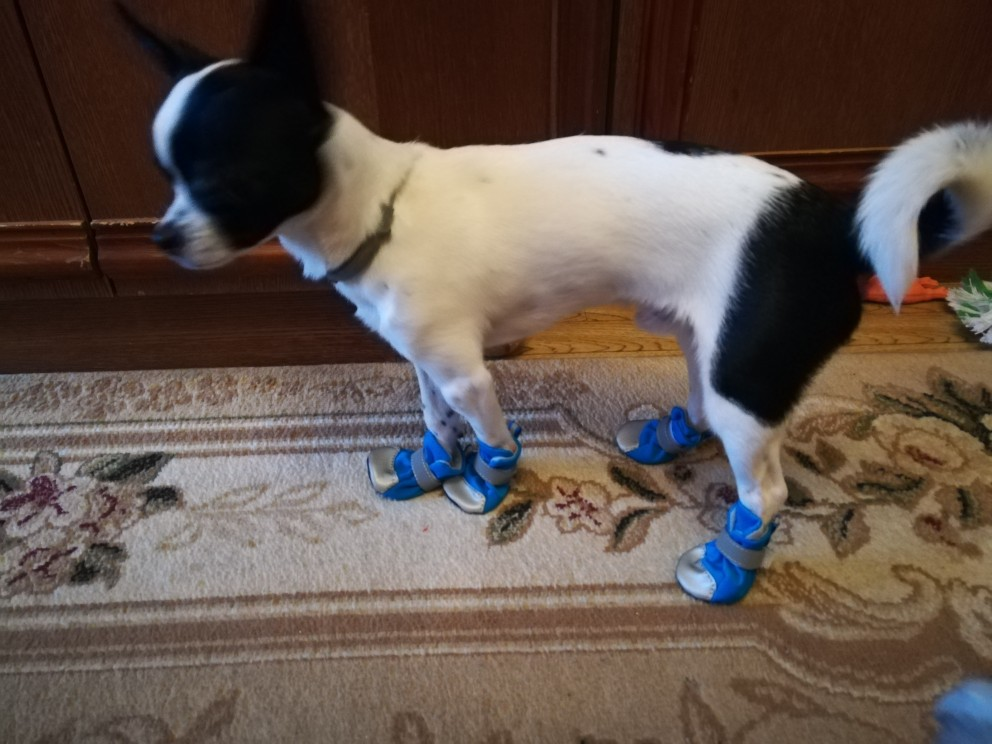 Waterproof Dog Boots | Small Dog Snow Boots | Reflective Dog Boots photo review