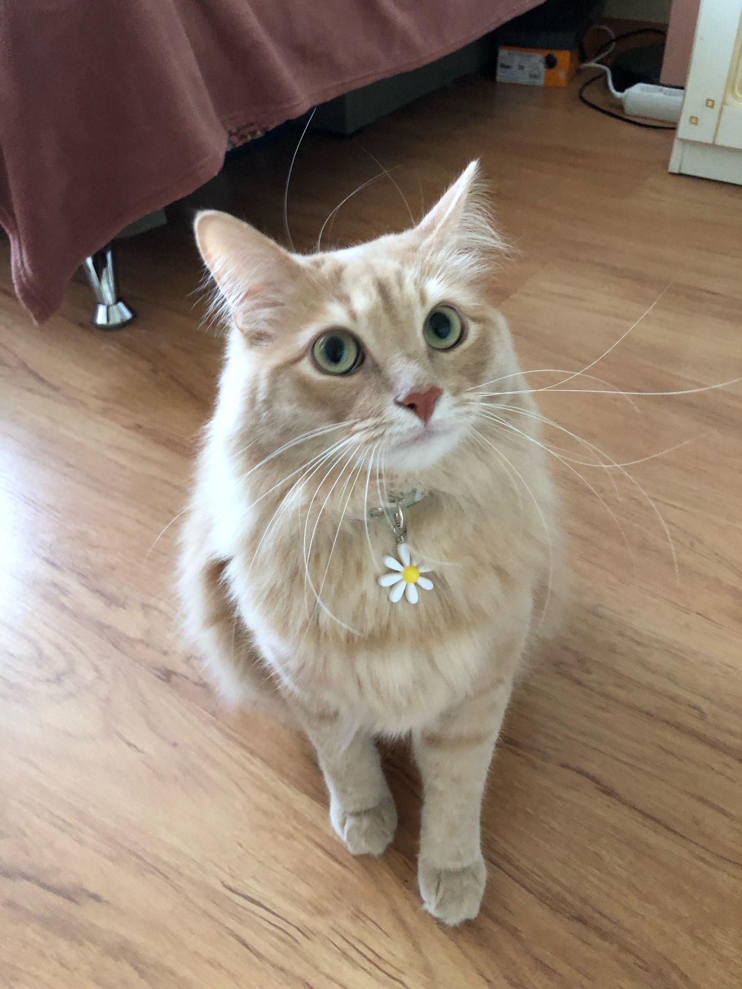 Coleira para Gatos Estilo Japonês | Coleira para Coelhos | Colar para Pets