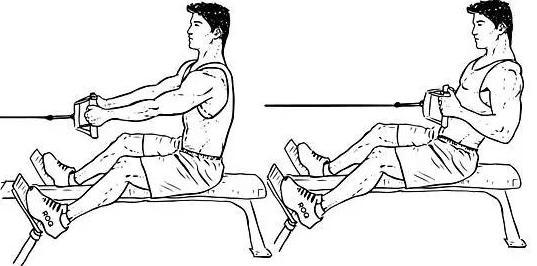 健身新手初步健身计划的安排方法-养生法典