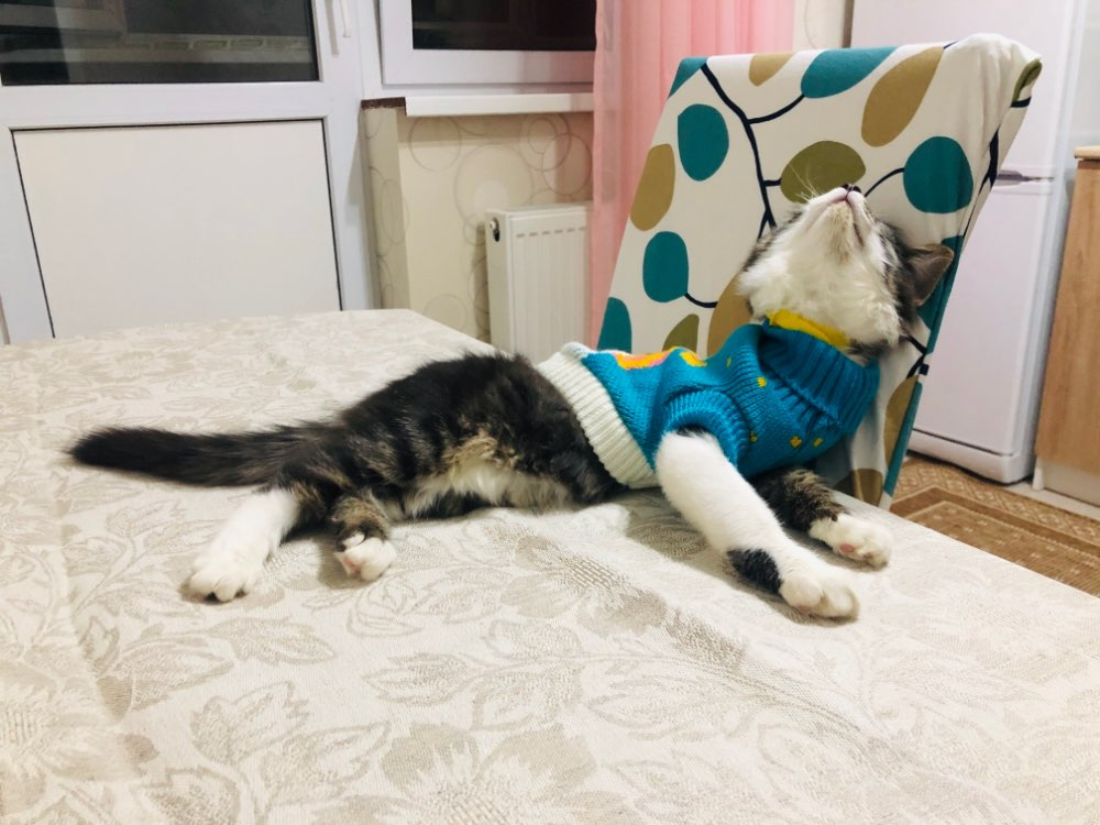 Kedi Kazağı