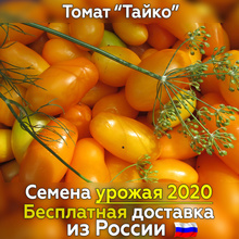 of Thai tomatoes for
