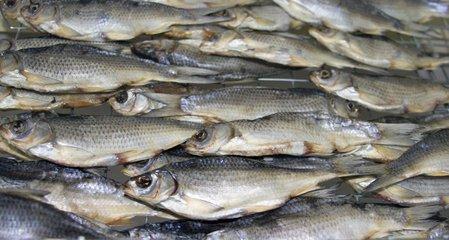 河鱼怎么煮更好吃 河鱼的做法大全-养生法典