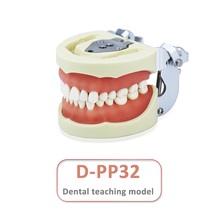 Dental-Model Simulation Tooth-Arrangement with 32pcs And Screw Teaching Removable D-PP32