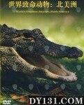 世界致命动物:北美洲